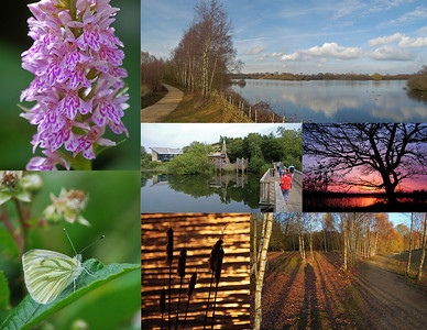 Whisby Nature Park Collage
