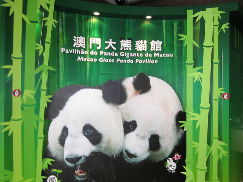 Hoi Hoi and Sam Sam are two pandas living in the Giant Panda Pavilion.