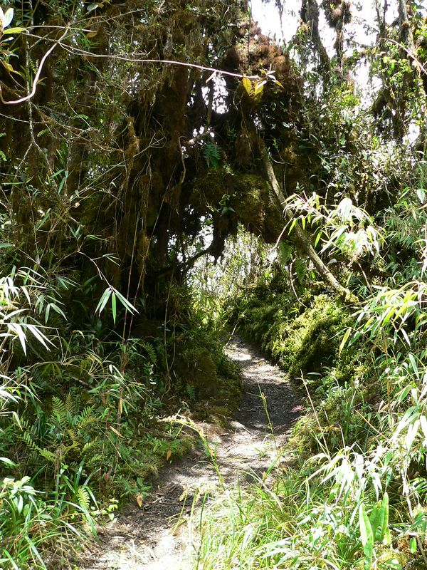The side trail we took was considerably less traveled, but all the more beautiful because of it. We're back in the cloud forest here.