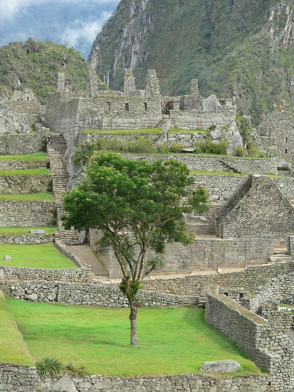 I doubt this tree was placed here by the Inca. Likely it was just left when they excavated this site. It is, however, quite lovely.