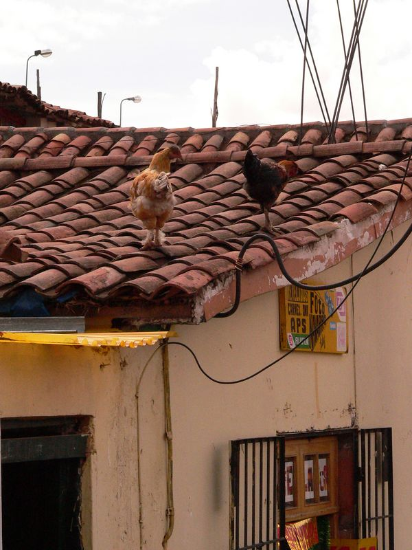 Typical rooftop in Cuszco. The chickens are atypical.