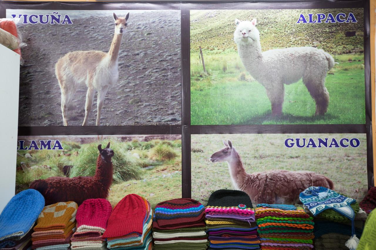 Pictorial Chart of Different Peruvian Mammals