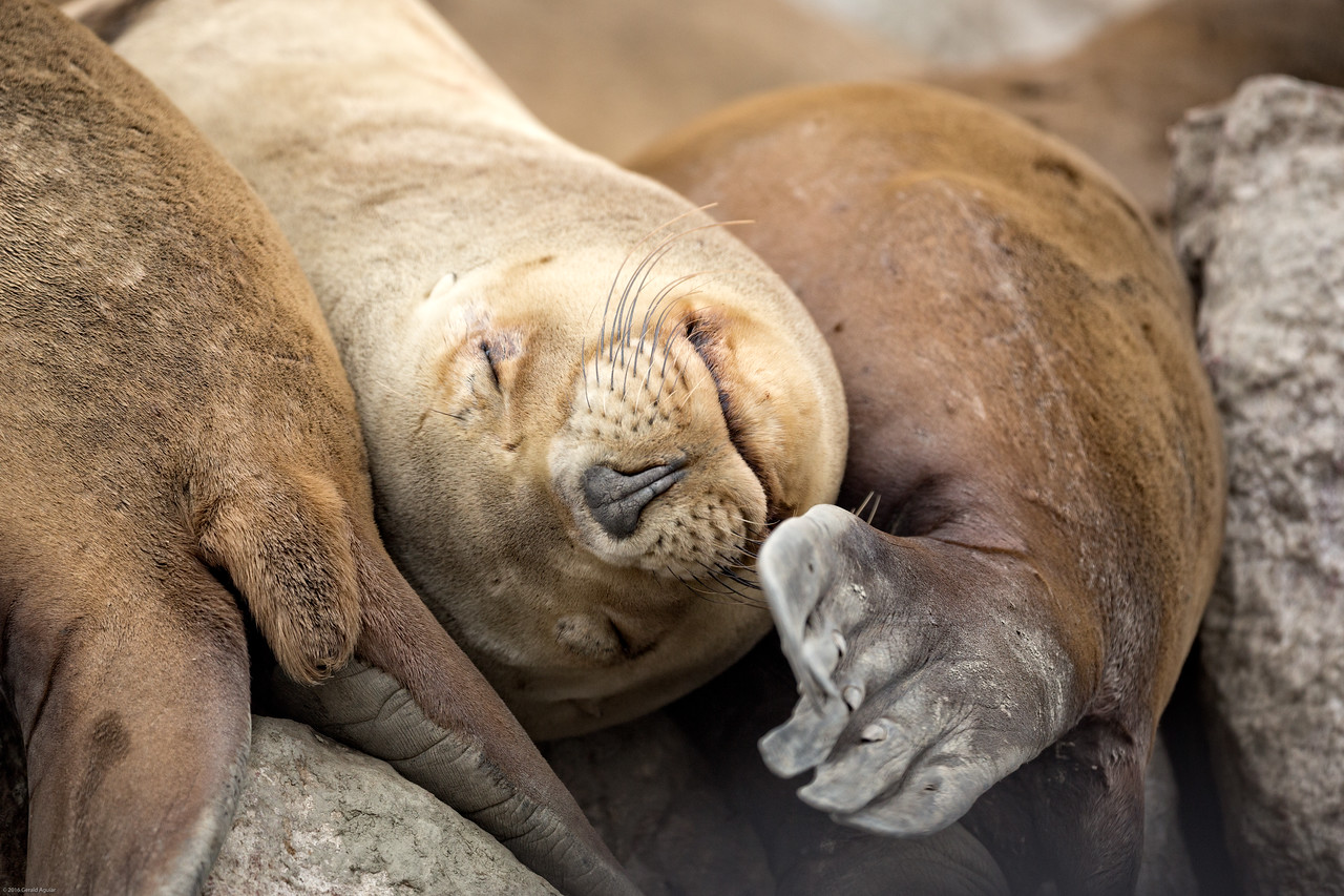 Sea Lion Taking a Siesta