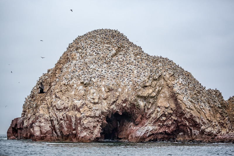 Thousands of Pelicans Atop and Island