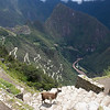 Aerial view of Machu Picchu (Also known as Aguas Calientes) with llama in foreground. Also visible, the winding road, Andes mountains and sacred valley, taken from the Sun Gate. At the bottom of the mountain range you can see the Urubama river.