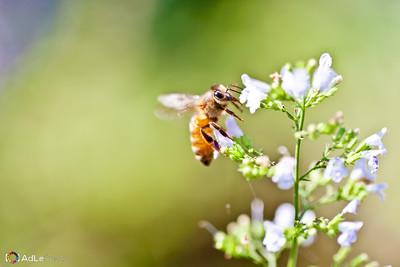 Bee MacroLG-0056