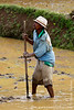 Villager Working the Rice Paddies
