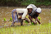 Villagers Working the Rice Paddies