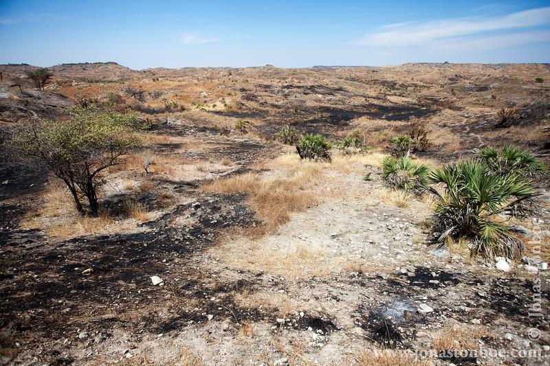 Fire Scorched Landscape