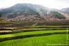 Village and Rice Paddies