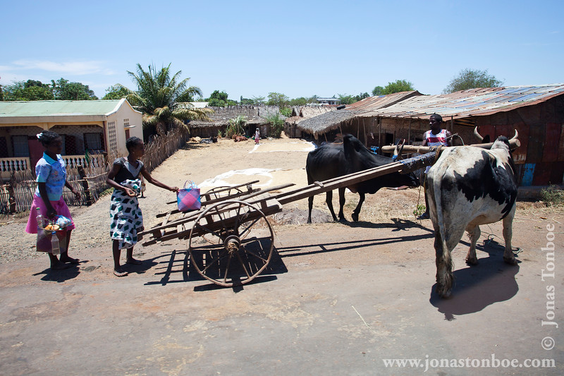 Villagers and Zebu Cart