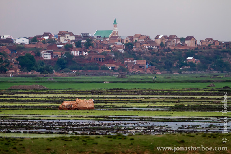 Rice Paddies and City