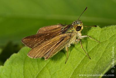 Antananarivo: Tsarasaotra Park - moth