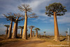 Route Nationale 8 between Tsiribihina River and Morondava: Avenue of the Baobabs at sunset