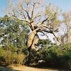 Baobabs amoureux - Madagascar