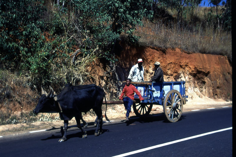 Local transportation on the way to Ambositra, Madagascar.