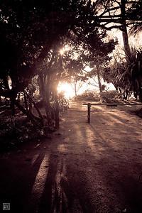 Ambila | Sunrise