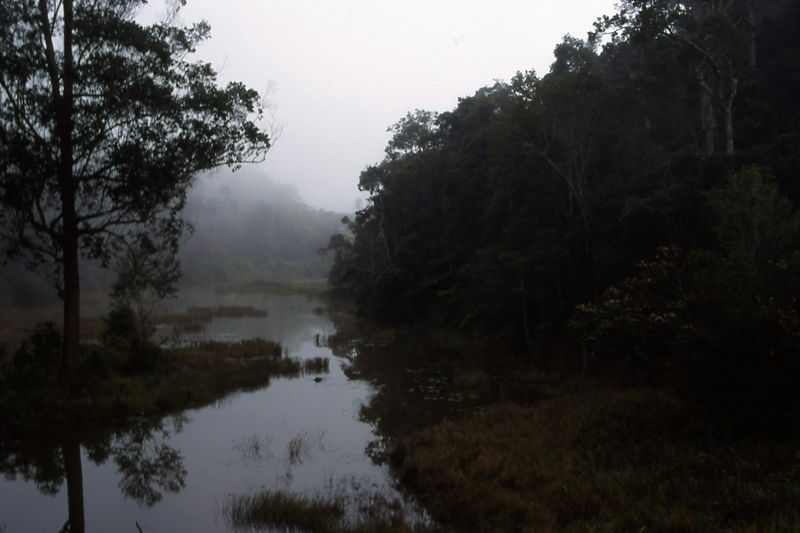 Early morning in Perinet Reserve, Madagascar.