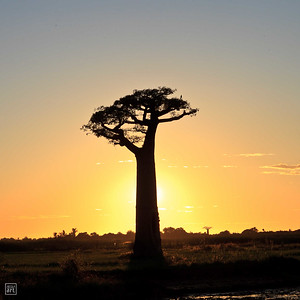 Morondava | Sunset over Baobab Alley