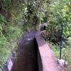 Vannkanaler frå toppen av øya..Stien går langs desse, ofte i regnskog lignande områder..