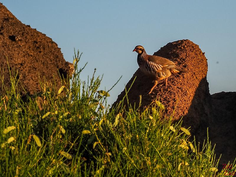 Bird at Pico do Arieiro