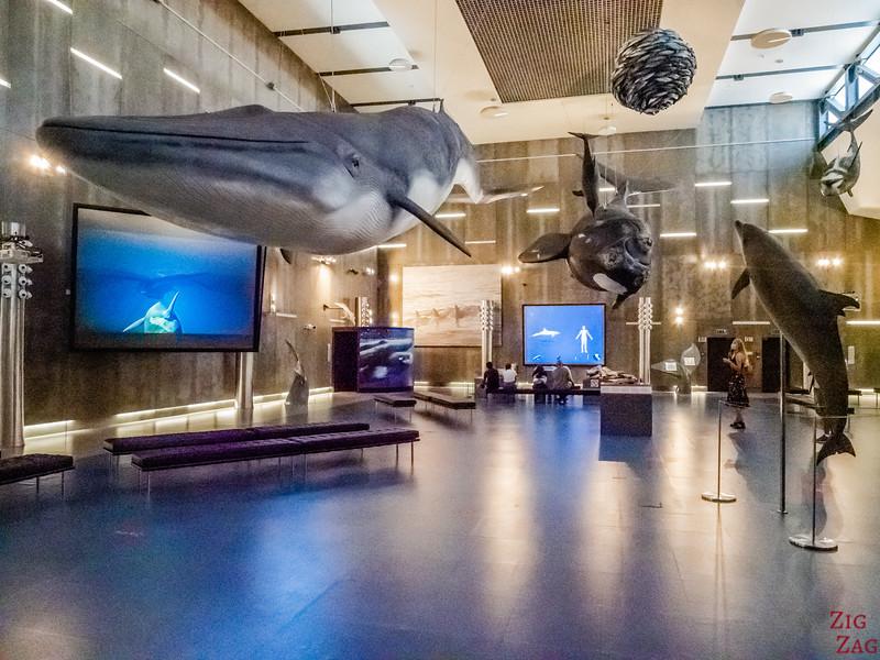 Whale museum in Caniçal