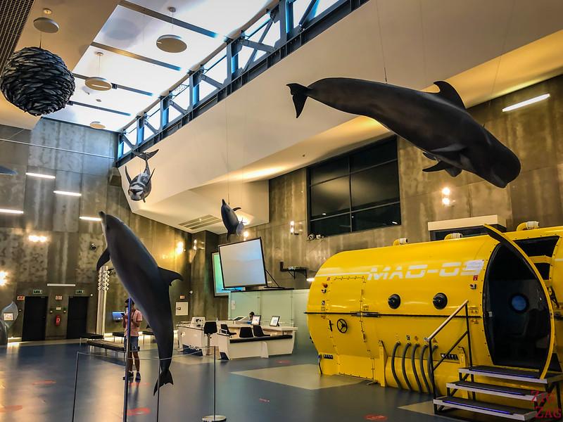 Whale museum in Caniçal 2