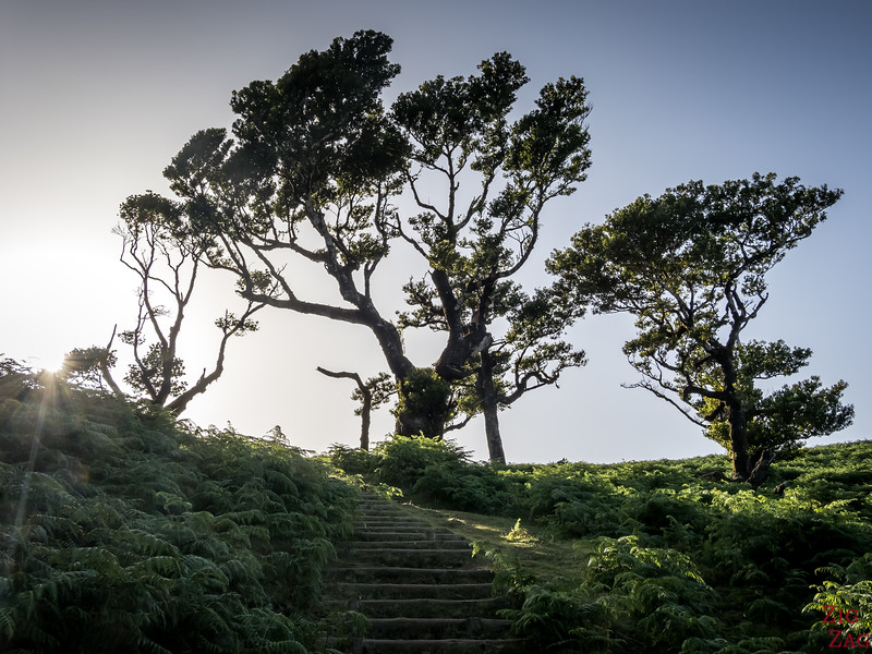 Fanal forest trees 2