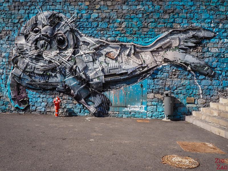 Camara de Lobos art - sea lion mural