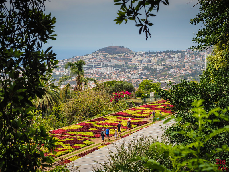 flowers of Madeira - Funchal Botanical garden