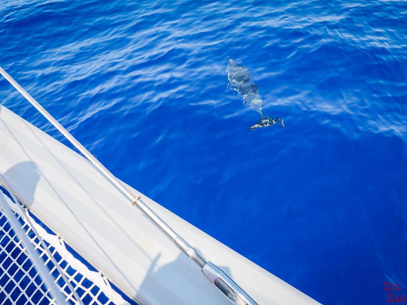 Dolphins from Catamaran