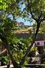 054 Municipal Gardens, Ribeira Brava