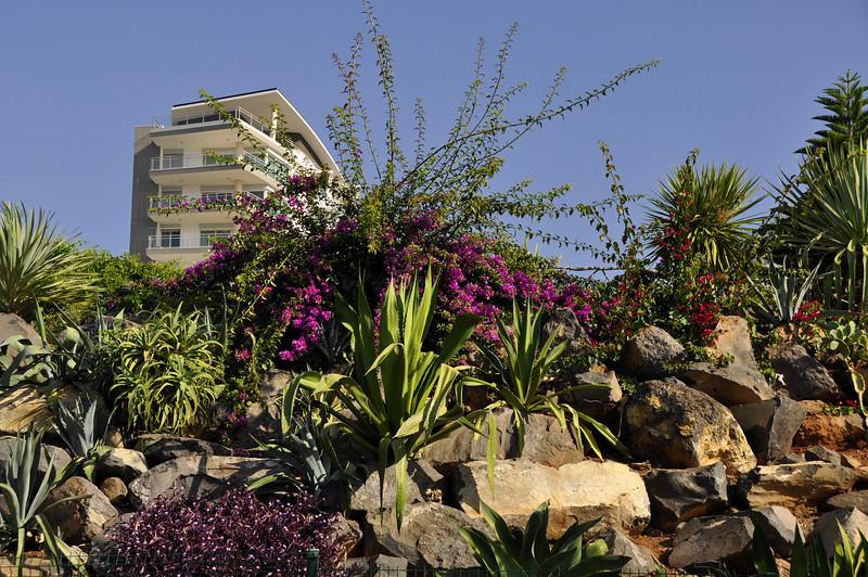 034 rock garden on promenade from Funchal to Camara