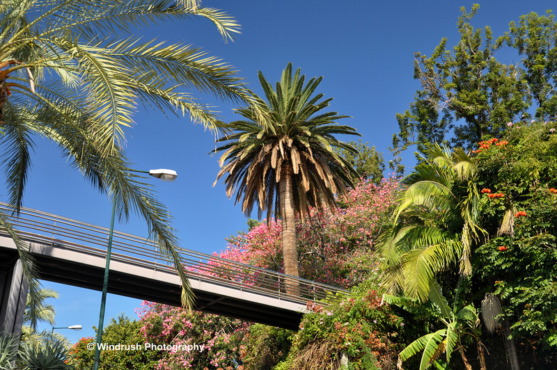 065 Old Savoy Gardens, Funchal