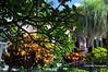 048 Municipal Gardens, Ribeira Brava