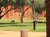 Our facility had several families of free roaming warthogs!