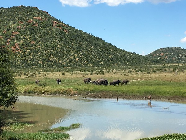 Caught a family of elephants who were heading to the watering hole