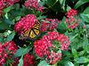 Olbrich Botanical Gardens Conservatory