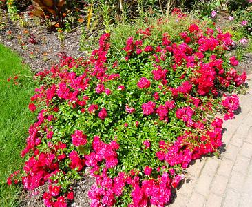 Madison, WI Botanical Gardens