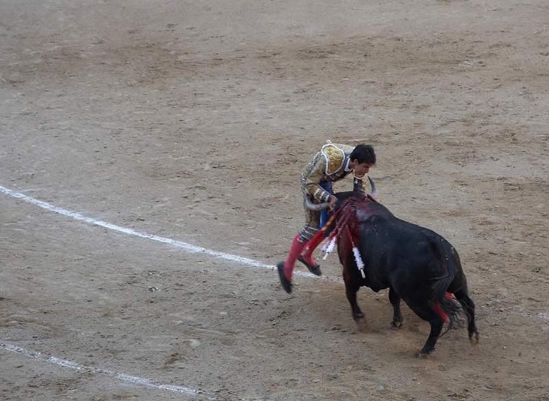 This matador was caught by the bull twice. This is the second time. The first time, he ended up flat on his back with only his arms holding the bull back.