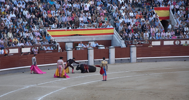 Here you can see the bull being finished with a dagger. The matador managed to finish the fight despite almost getting gored twice.