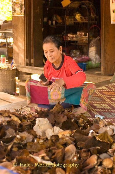 Lahu Woman Processing Wild Mushrooms Outside Her Home