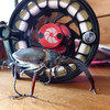 Cantaria Beetle