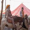 suki-zoe-india-2013 (1049 of 1067)