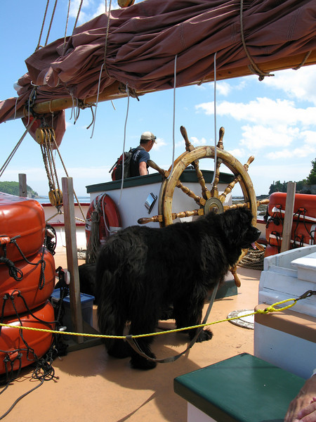 One of the three Newfoundland dogs aboard the Margaret Todd.   These dogs were huge.....and very friendly.