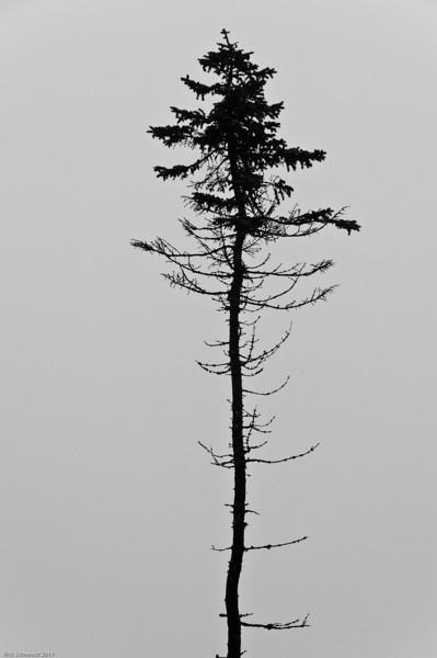 Maine Contemplative Schmiedt-131