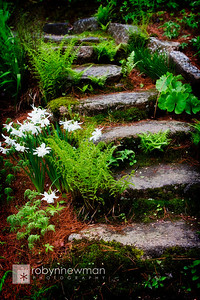 Steps in the garden behind the College of the Atlantic in Bar Harbor, Maine
