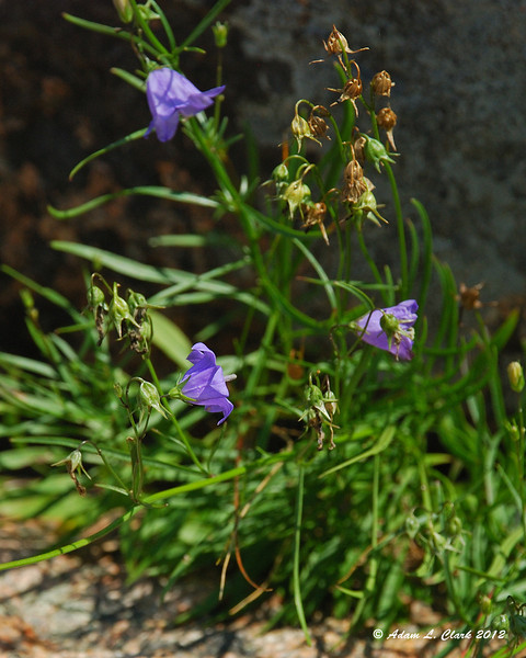 A small purple flower on the mountain
