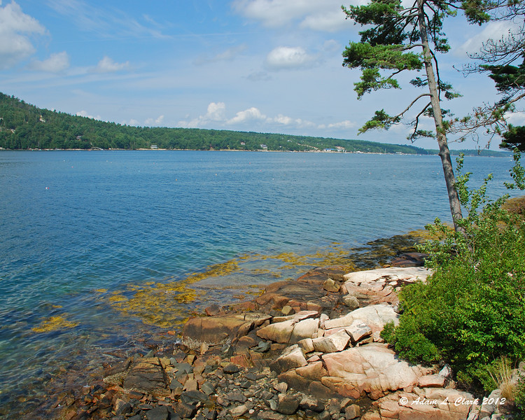 Looking up into Somes Sound