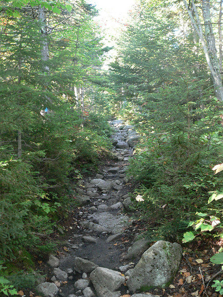 The beginning of the trail from the campground to the base of the mountain.